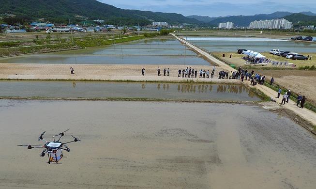 [사진으로 보는 한국] 농업용 대형 드론으로 볍씨 파종